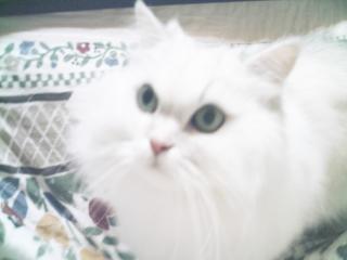 フィーナさん 2007-02-17-03