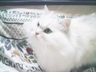 フィーナさん 2007-02-17-04