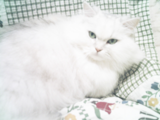 フィーナさん 2007-02-17-06