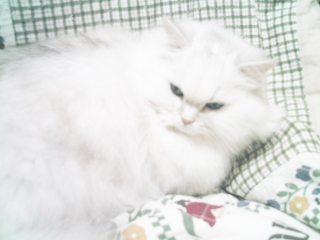 フィーナさん 2007-02-17-07