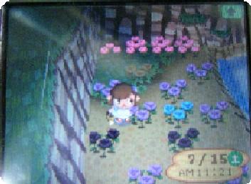 の 方 花 増やし どうぶつ 森