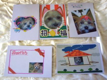 看板犬茶々ちゃんのポストカード
