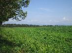 5月の牧草地 4