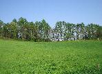 5月の牧草地 6