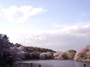 07桜17
