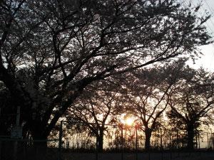 07桜25