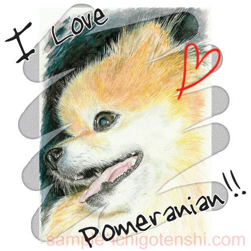 I LOVE POMERANIAN (1)