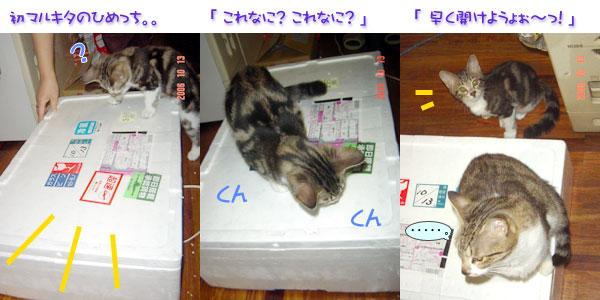 かにほたて箱1