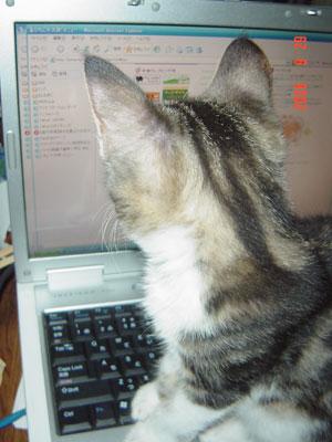 パソコン中