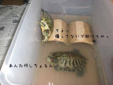 亀災難.jpg