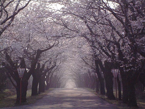 母智丘公園(都城市)