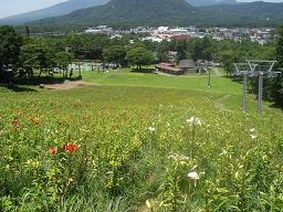軽井沢ゆり園4