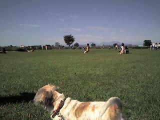 公園1009
