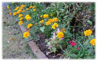 マリー花壇1018