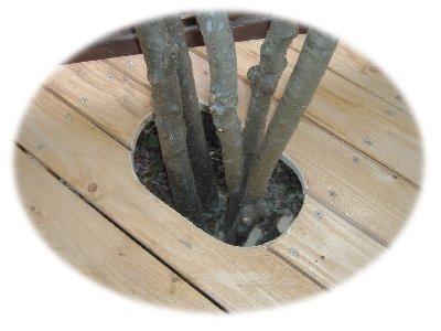 ウメモドキの穴1