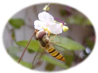 ブライダルベールに蜂
