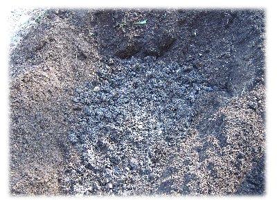 堆肥蒔き2