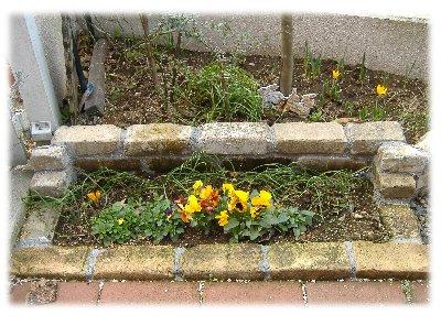 玄関の花壇070312