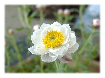 花かんざし070225
