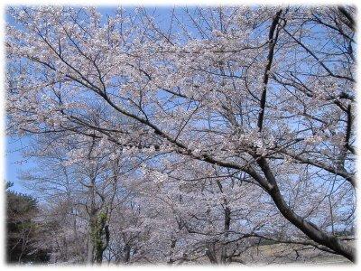 桜グリーンパーク