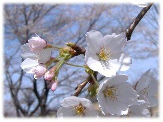 桜グリーンパークup