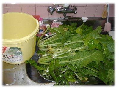 野沢菜お湯洗い