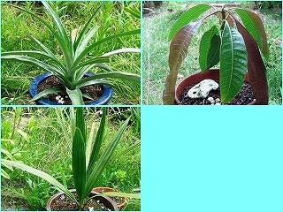 熱帯植物.jpg