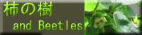 柿の樹andBeetles(ココ)