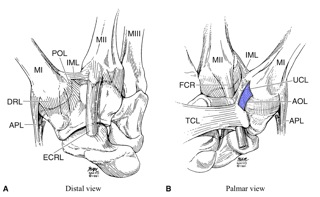 Index in addition Fulltext likewise Knee Pain as well Patellar Dislocations Anatomy And Etiology in addition Upper Leg Ligaments And Tendons. on diagram of knee ligaments injury
