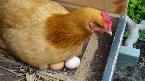 鳥が卵を温める理由は体が冷えて気持ちいいからって本当?