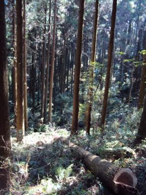DSC00136倒木と林.jpg
