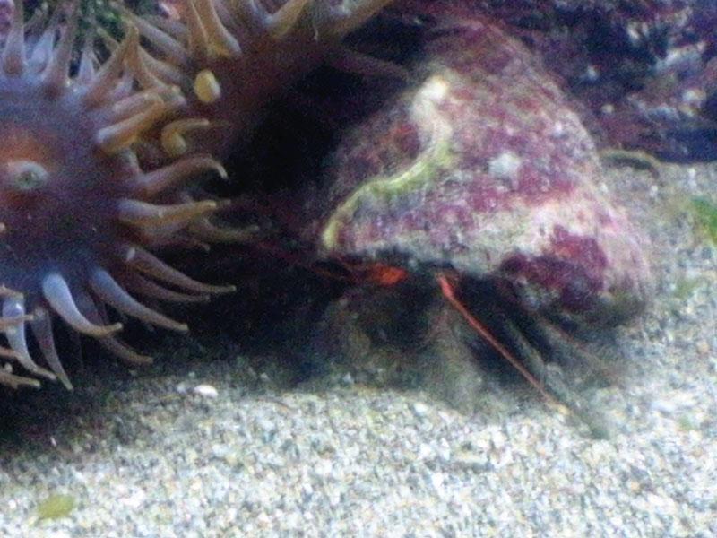 海洋生物採取