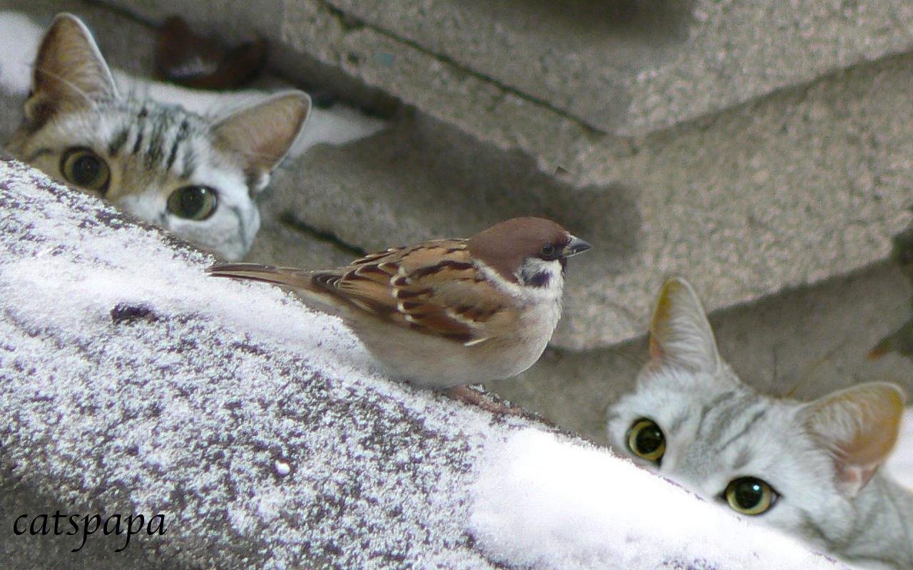 雀の猫画像