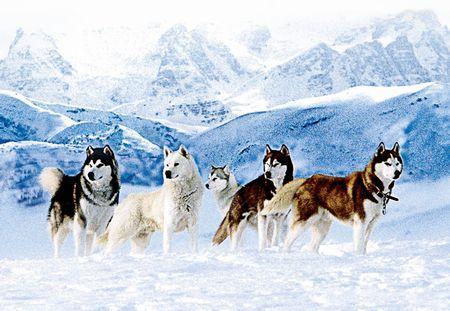 南極物語の画像 p1_20