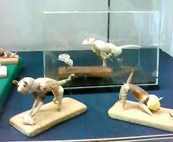 貝殻の動物