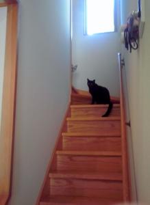 階段で見ているリトちゃんと夜くん