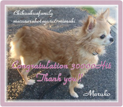 30000Hit達成しました~♪ いつもありがとうございます!!な~んか管理人メガネ選びでバタバタしてるうちに超えてましたわ~