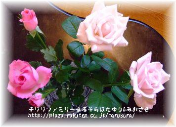 花の日で用意したバラ家用