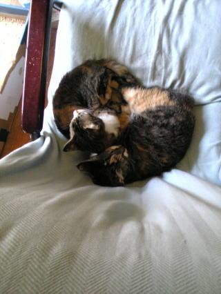 ハート形の猫