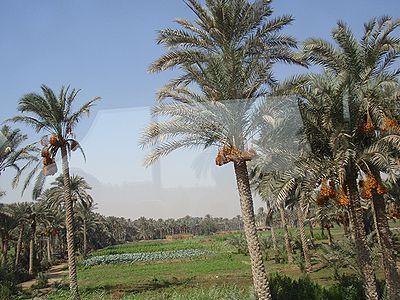 メンフィス (エジプト)の画像 p1_14