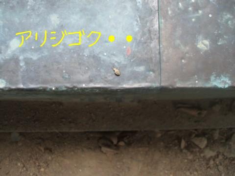 アリジゴク.JPG