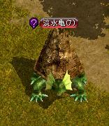 淡水亀.JPG