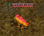 炎のヒレ.JPG
