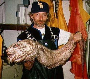 シルバーな魚