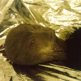 宇宙人の死骸2