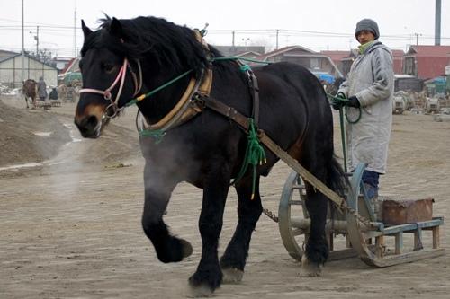 かっこいい馬の画像くれ ->画像>259枚