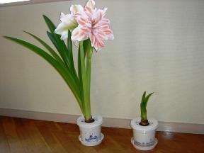 2つの花の違い