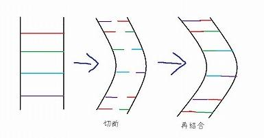 パーマの仕組み.jpg