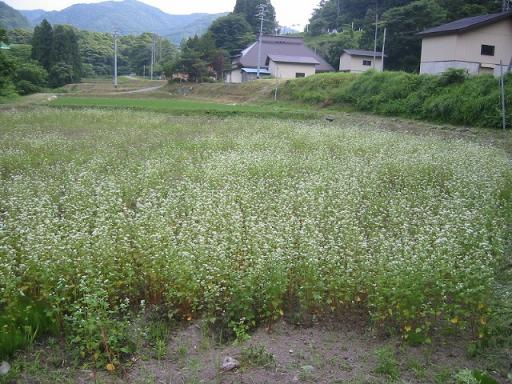 2008_07070033.jpg