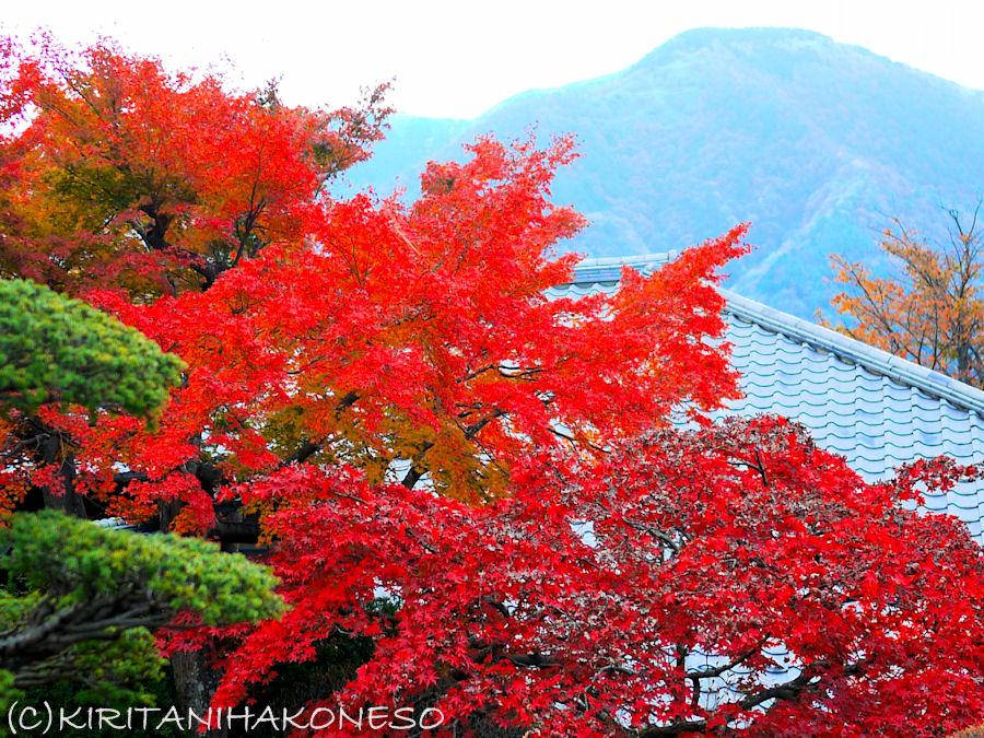 2011年11月16日大文字と紅葉.jpg